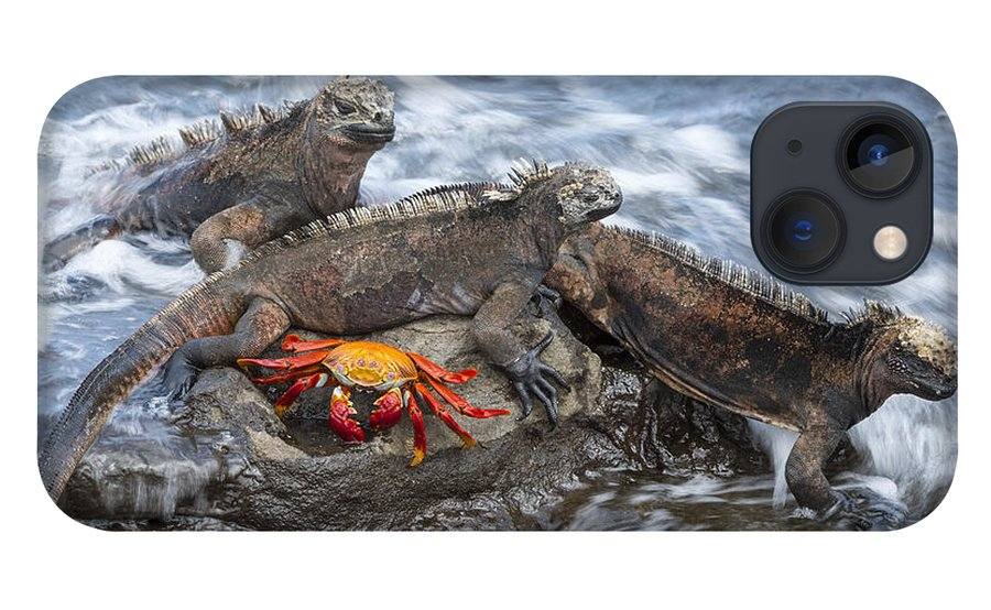 Tui De Roy iPhone 13 Case featuring the photograph Marine Iguana Trio And Sally Lightfoot by Tui De Roy