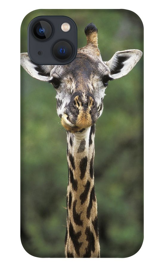 00198689 iPhone 13 Case featuring the photograph Masai Giraffe Serengeti by Konrad Wothe
