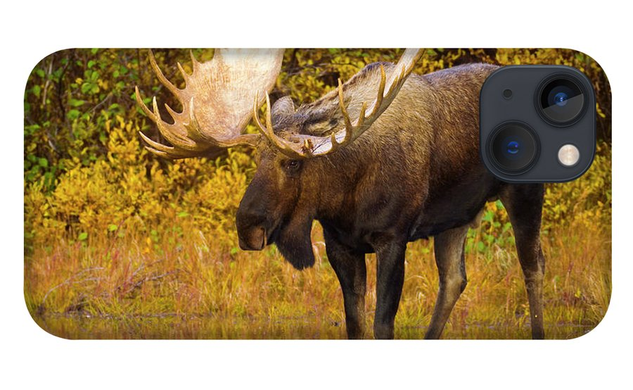 00345399 iPhone 13 Case featuring the photograph Moose In Glacial Kettle Pond by Yva Momatiuk John Eastcott