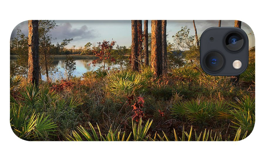 Tim Fitzharris iPhone 13 Case featuring the photograph Saw Palmetto And Longleaf Pine by Tim Fitzharris