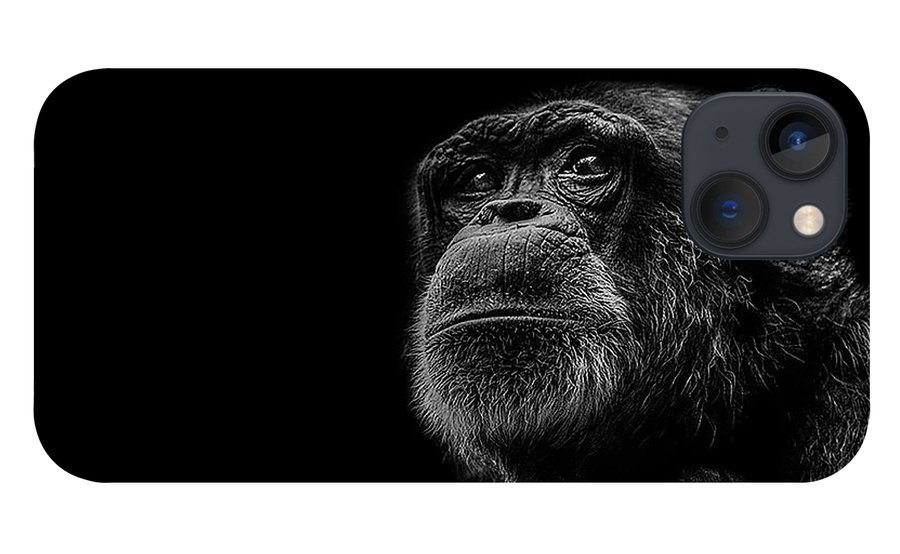 Chimpanzee iPhone 13 Case featuring the photograph Trepidation by Paul Neville
