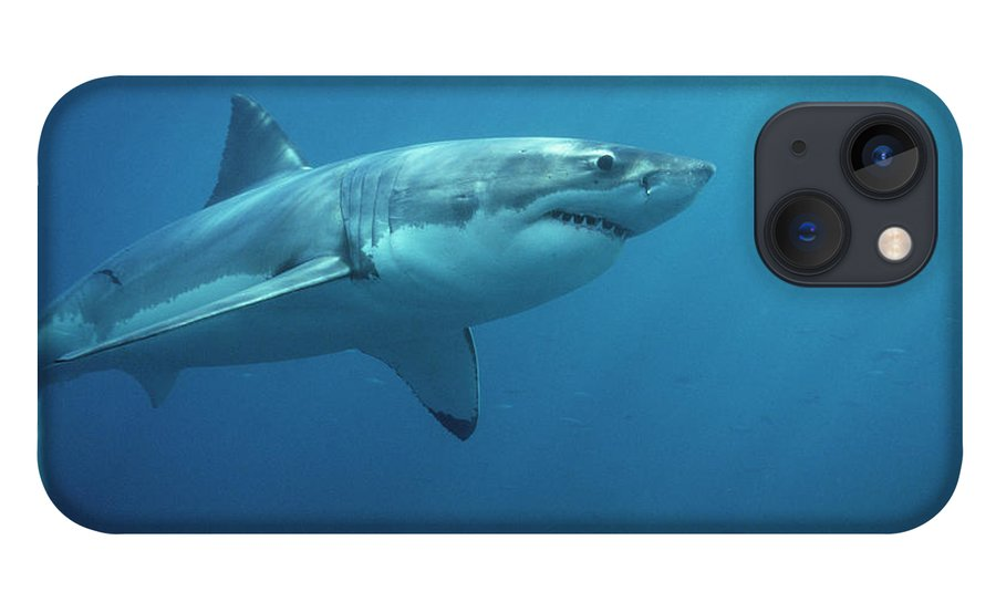 Mp iPhone 13 Case featuring the photograph Great White Shark Carcharodon by Mike Parry