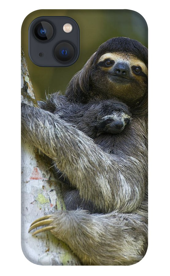 Mp iPhone 13 Case featuring the photograph Brown-throated Three-toed Sloth by Suzi Eszterhas