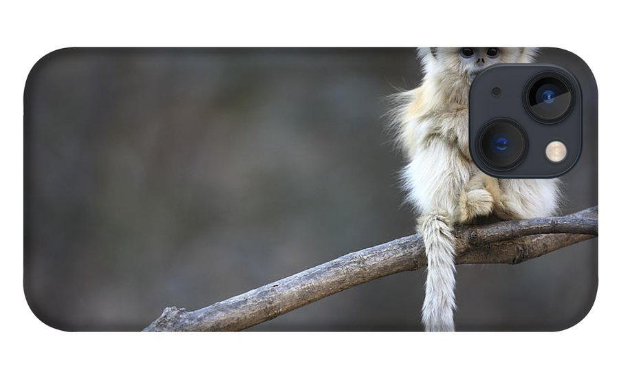 Mp iPhone 13 Case featuring the photograph Golden Snub-nosed Monkey by Cyril Ruoso