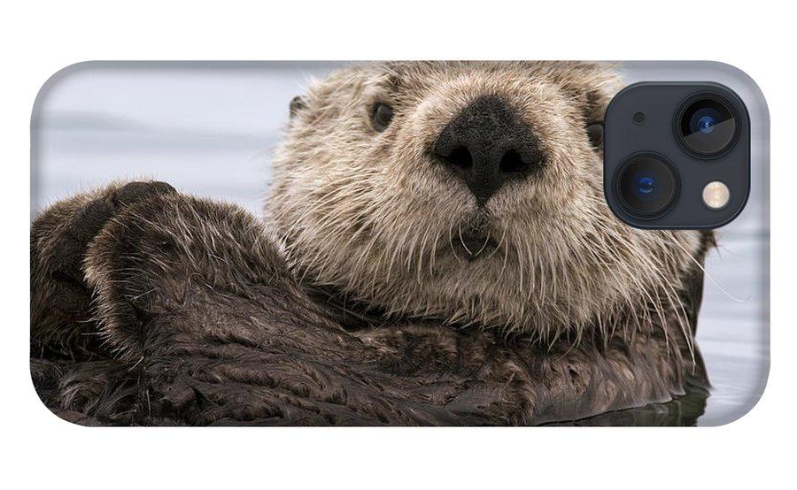 00429873 iPhone 13 Case featuring the photograph Sea Otter Elkhorn Slough Monterey Bay by Sebastian Kennerknecht