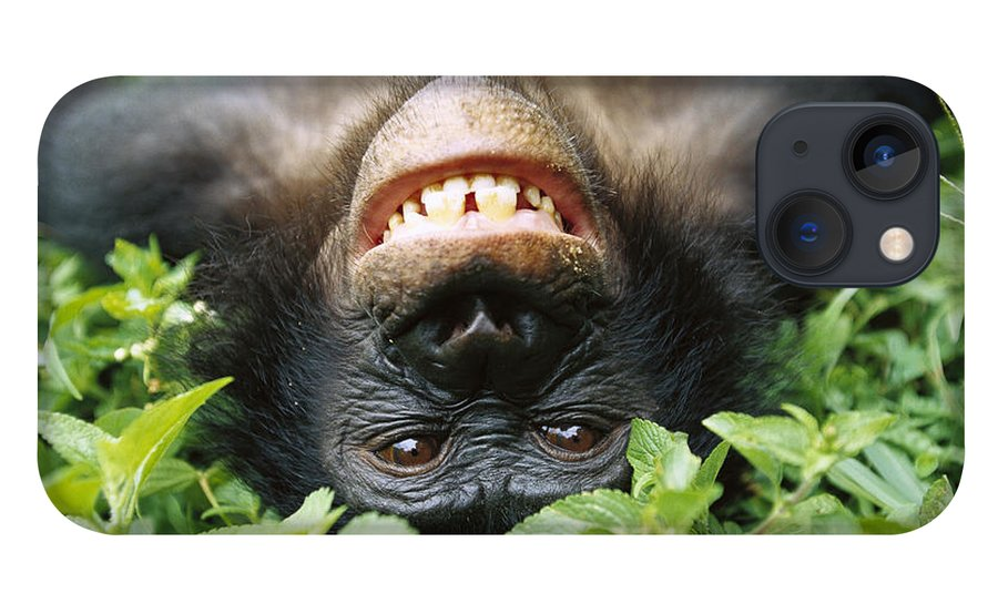 Mp iPhone 13 Case featuring the photograph Bonobo Smiling by Cyril Ruoso
