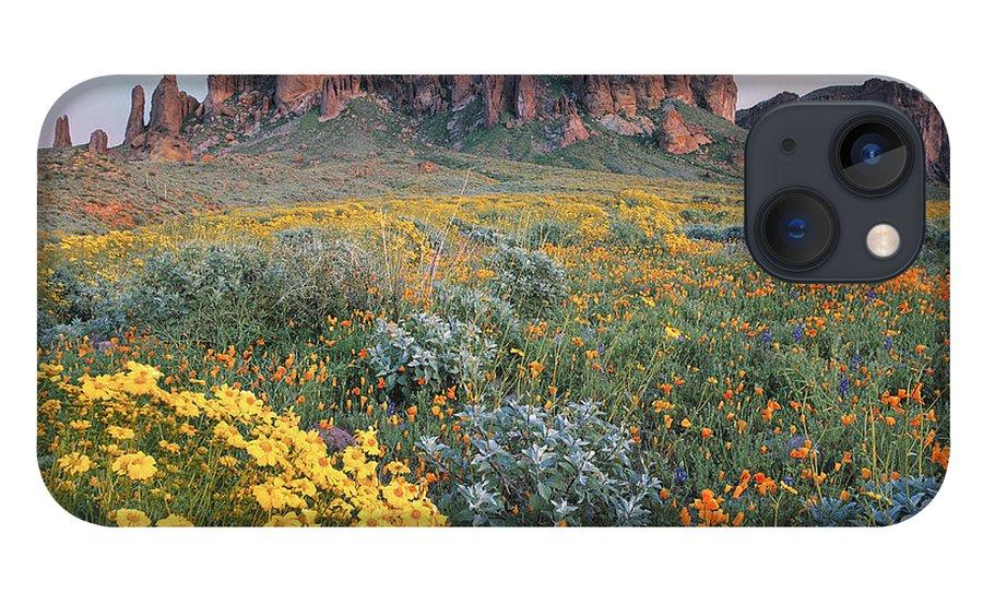 00175967 iPhone 13 Case featuring the photograph California Brittlebush Lost Dutchman by Tim Fitzharris