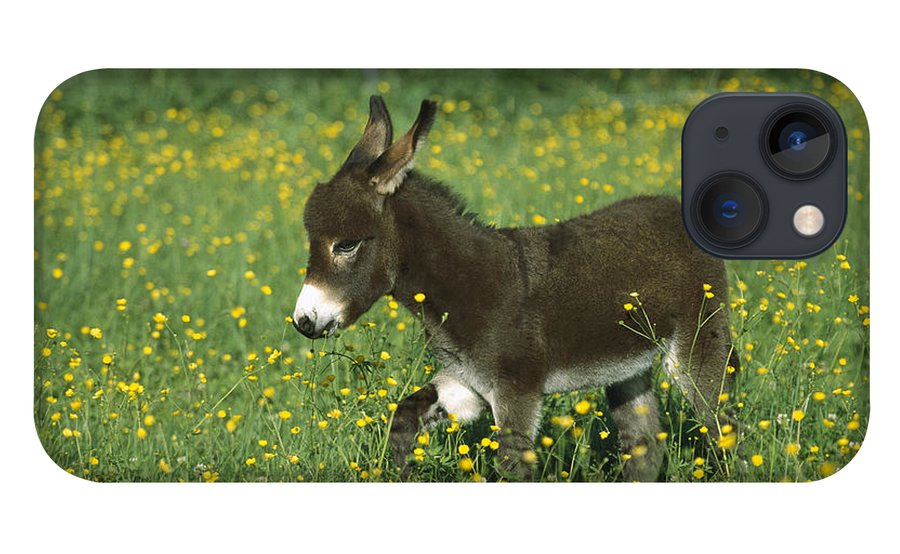 Mp iPhone 13 Case featuring the photograph Donkey Equus Asinus Foal In Field by Konrad Wothe