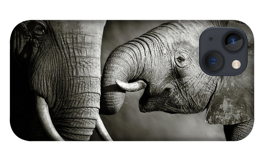 Elephant; Interact; Touch; Gently; Trunk; Young; Large; Small; Big; Tusk; Together; Togetherness; Passionate; Affectionate; Behavior; Art; Artistic; Black; White; B&w; Monochrome; Image; African; Animal; Wildlife; Wild; Mammal; Animal; Two; Moody; Outdoor; Nature; Africa; Nobody; Photograph; Addo; National; Park; Loxodonta; Africana; Muddy; Caring; Passion; Affection; Show; Display; Reach iPhone 13 Case featuring the photograph Elephant affection by Johan Swanepoel