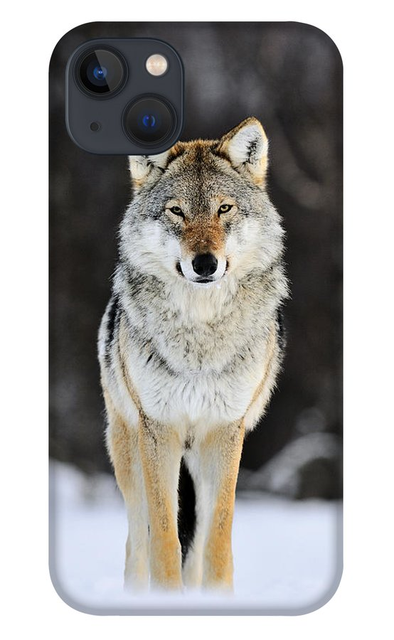 Mp iPhone 13 Case featuring the photograph Gray Wolf in the Snow by Jasper Doest