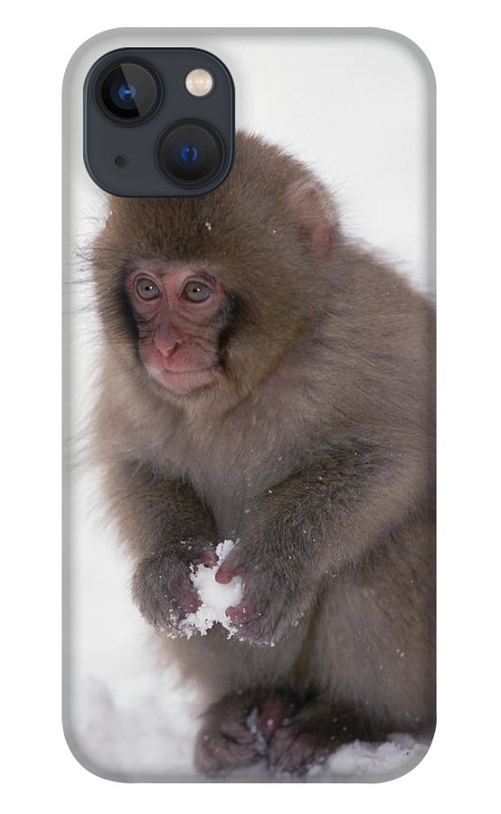 Mp iPhone 13 Case featuring the photograph Japanese Macaque Macaca Fuscata Baby by Konrad Wothe