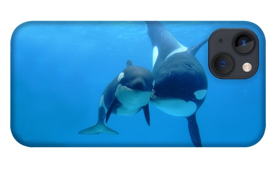 Mp iPhone 13 Case featuring the photograph Orca Mother And Newborn by Hiroya Minakuchi