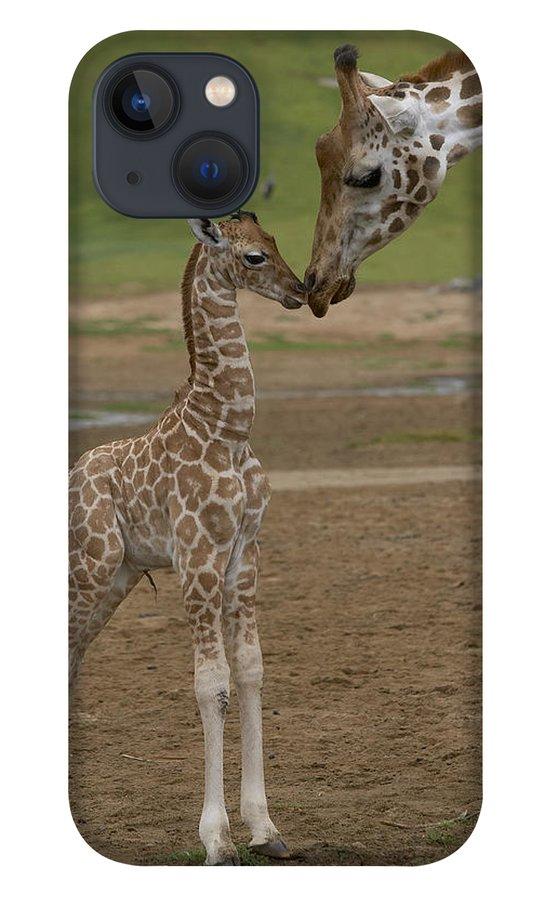 Mp iPhone 13 Case featuring the photograph Rothschild Giraffe Giraffa by San Diego Zoo