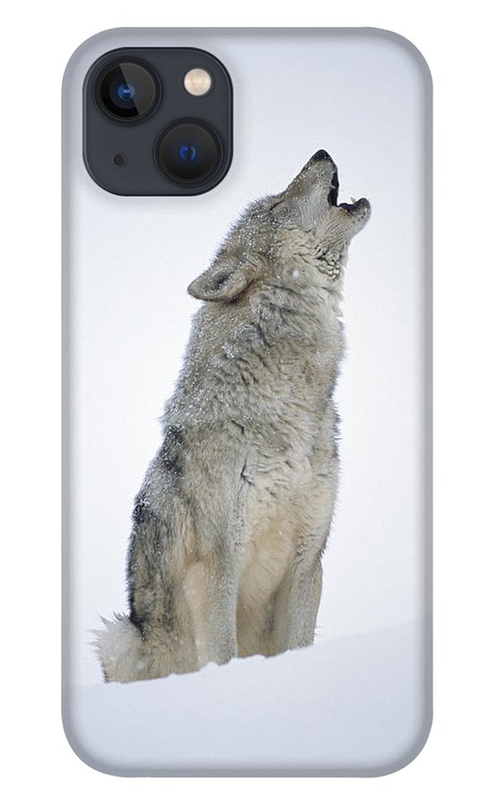 00174271 iPhone 13 Case featuring the photograph Timber Wolf Portrait Howling In Snow by Tim Fitzharris
