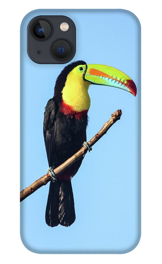 keel-billed-toucan-panama-marlin-and-laura-hum.jpg?&targetx=-874&targety=2&imagewidth=2410&imageheight=1607&modelwidth=902&modelheight=1581&backgroundcolor=FFFFFF&orientation=0