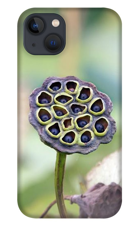 lotus-seed-pods-marlin-and-laura-hum.jpg?&targetx=-732&targety=1&imagewidth=2370&imageheight=1581&modelwidth=902&modelheight=1581&backgroundcolor=A4AD9E&orientation=0
