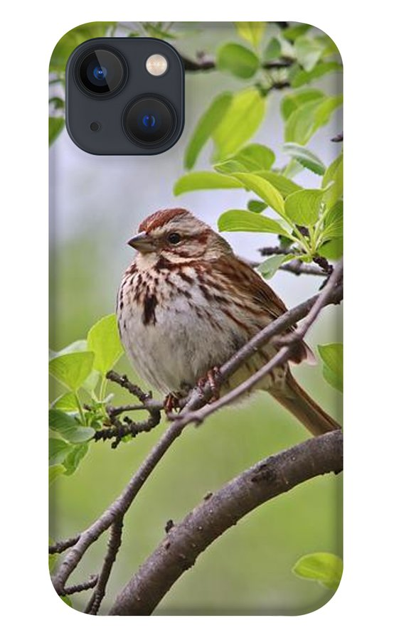 song-sparrow-in-spring-marlin-and-laura-hum.jpg?&targetx=-731&targety=3&imagewidth=2366&imageheight=1581&modelwidth=902&modelheight=1581&backgroundcolor=A8A9A1&orientation=0