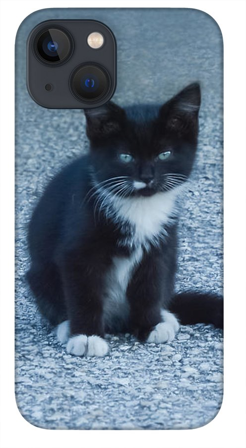 tuxedo-black-and-white-kitten-sitting-and-watching-zina-stromberg.jpg?&targetx=-615&targety=3&imagewidth=2346&imageheight=1835&modelwidth=1065&modelheight=1835&backgroundcolor=5E7D97&orientation=0