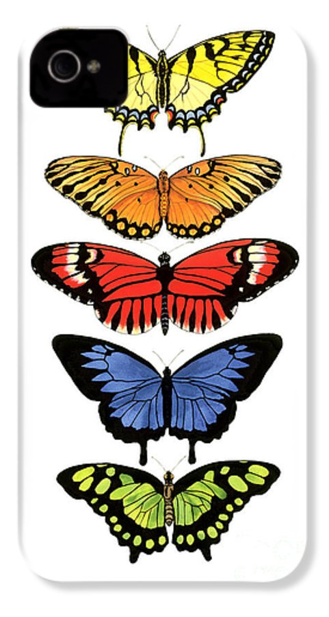 Butterflies IPhone 4 Case featuring the painting Rainbow Butterflies by Lucy Arnold