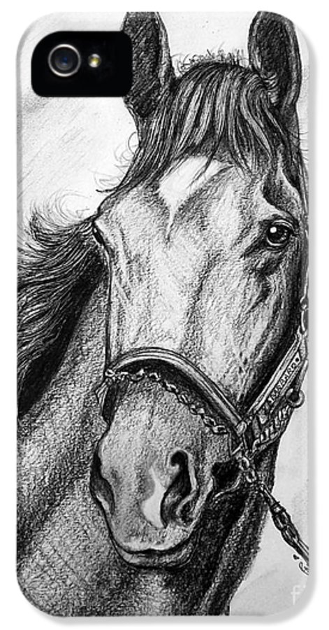 Barbaro IPhone 5 Case featuring the drawing Barbaro by Patrice Torrillo