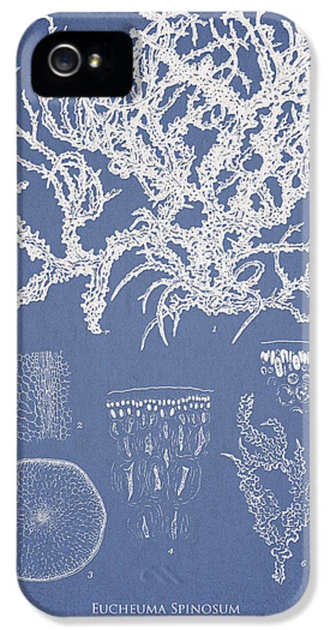 Algae IPhone 5 Case featuring the drawing Eucheuma Spinosum by Aged Pixel
