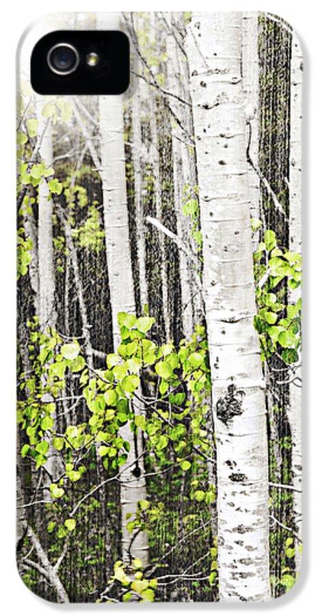 Aspen IPhone 5 Case featuring the photograph Aspen Grove by Elena Elisseeva