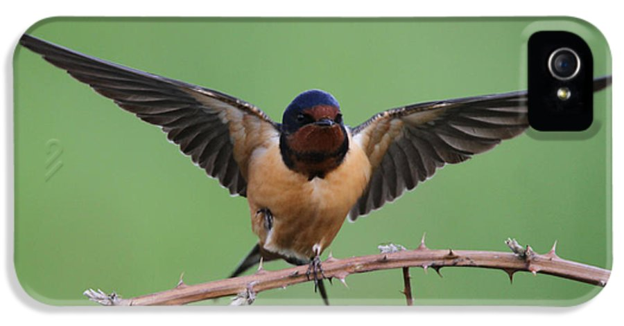 Swallow IPhone 5 Case featuring the photograph Barn Swallow by Angie Vogel