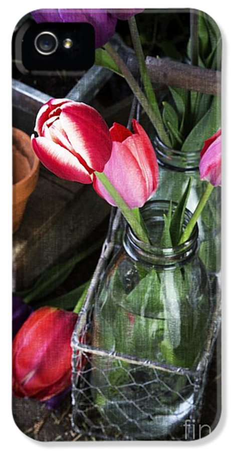 Barn IPhone 5 Case featuring the photograph Beautiful Spring Tulips by Edward Fielding