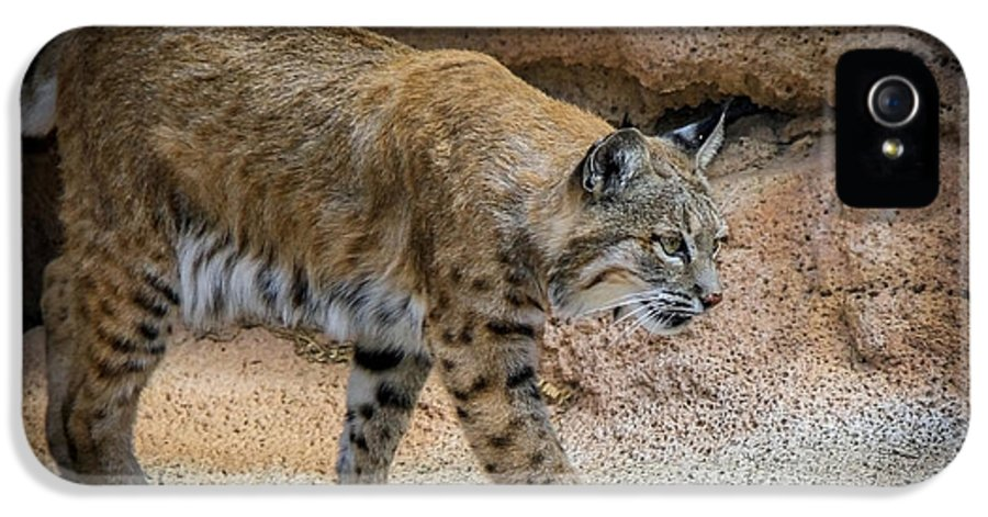 Bobcats IPhone 5 Case featuring the photograph Bobcat by Elaine Malott