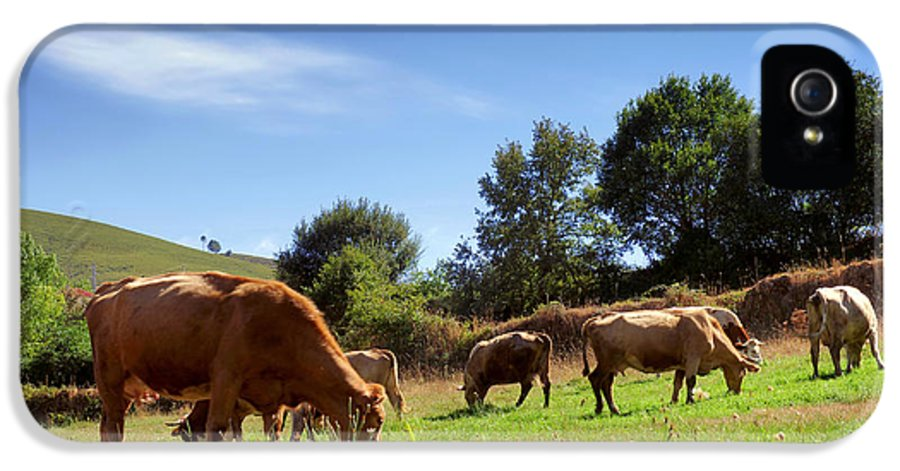 Agriculture IPhone 5 Case featuring the photograph Bovine Cattle by Carlos Caetano