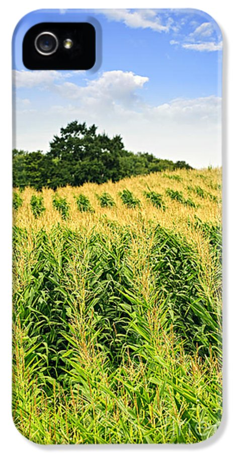 Agriculture IPhone 5 Case featuring the photograph Corn Field by Elena Elisseeva