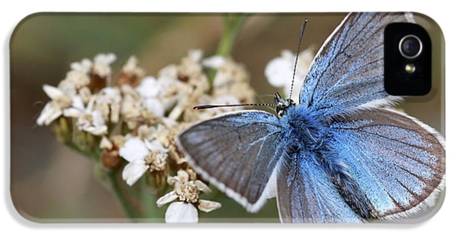Eastern Baton Blue IPhone 5 Case featuring the photograph Eastern Baton Blue by Amos Dor
