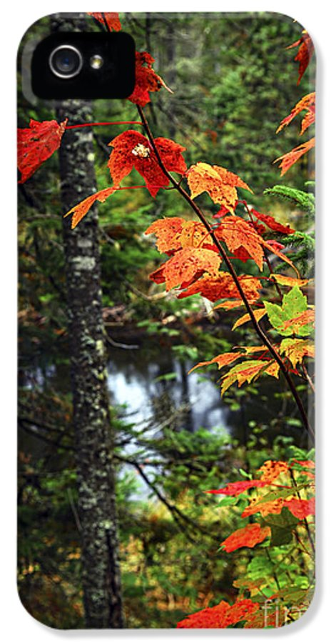 Autumn IPhone 5 Case featuring the photograph Fall Forest And River by Elena Elisseeva