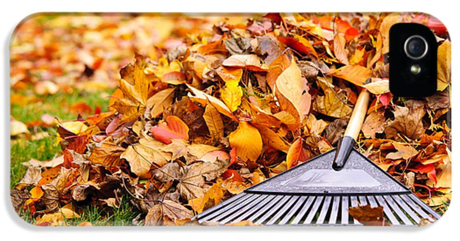 Rake IPhone 5 Case featuring the photograph Fall Leaves With Rake by Elena Elisseeva