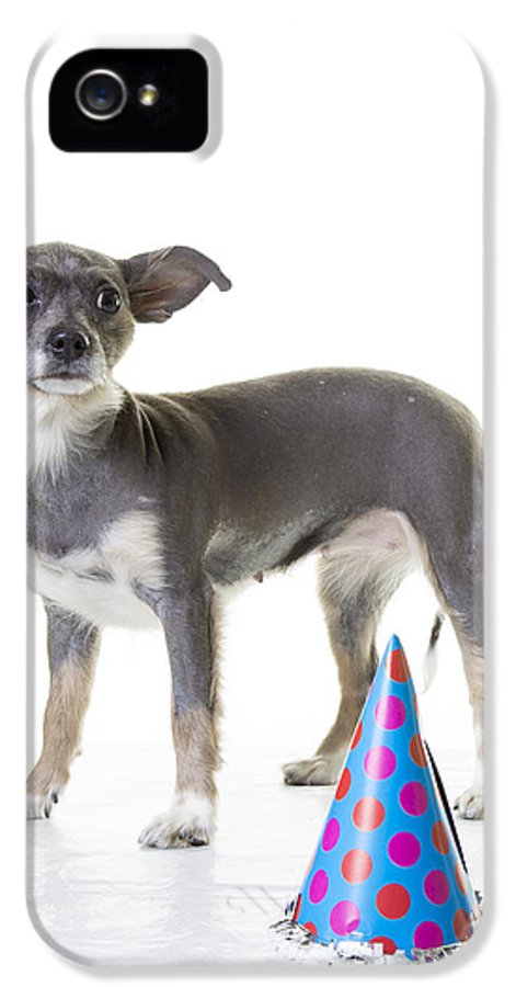 Dog IPhone 5 Case featuring the photograph Happy Birthday by Edward Fielding