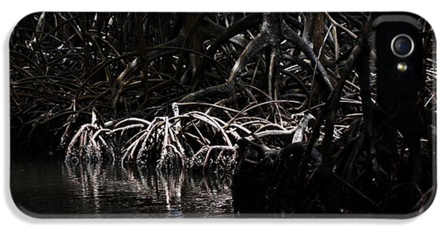 Archaeology IPhone 5 Case featuring the photograph Mangrove Forest Of The Los Haitises National Park Dominican Republic by Andrei Filippov