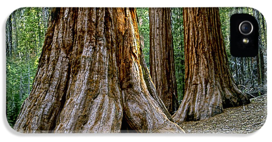 Redwoods IPhone 5 Case featuring the photograph Mariposa Grove by Bill Gallagher
