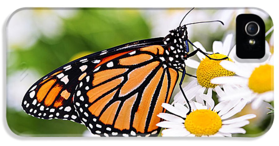 Monarch IPhone 5 Case featuring the photograph Monarch Butterfly by Elena Elisseeva