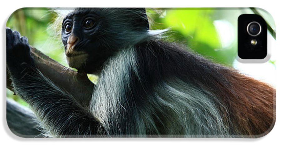 Red Colobus Monkey IPhone 5 Case featuring the photograph Red Colobus Monkey by Aidan Moran