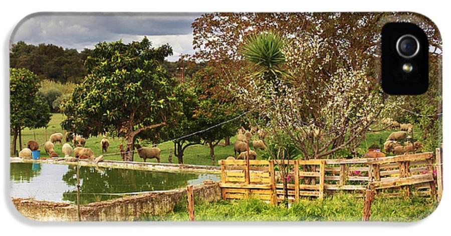 Agriculture IPhone 5 Case featuring the photograph Rural Scene by Carlos Caetano