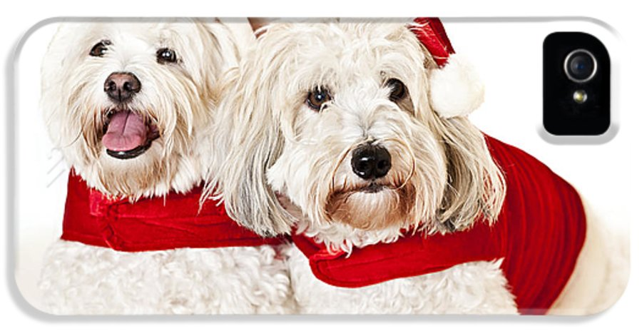Dogs IPhone 5 Case featuring the photograph Two Cute Dogs In Santa Outfits by Elena Elisseeva