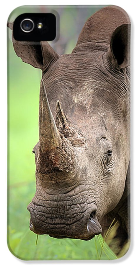 Square-lipped IPhone 5 Case featuring the photograph White Rhinoceros by Johan Swanepoel
