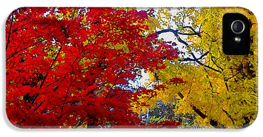 Autumn IPhone 5 Case featuring the photograph Fall Leaves by Ariane Moshayedi
