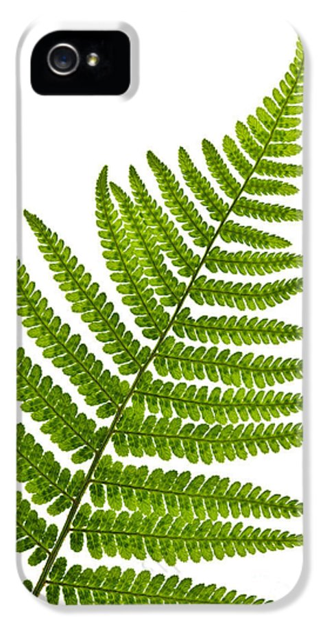 Fern IPhone 5 Case featuring the photograph Fern Leaf by Elena Elisseeva