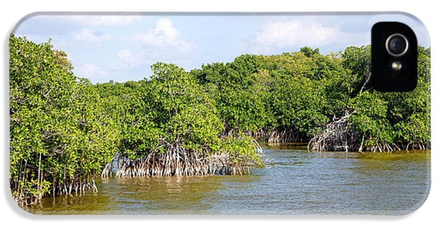 Everglades IPhone 5 Case featuring the digital art Mangrove Forest by Carol Ailles