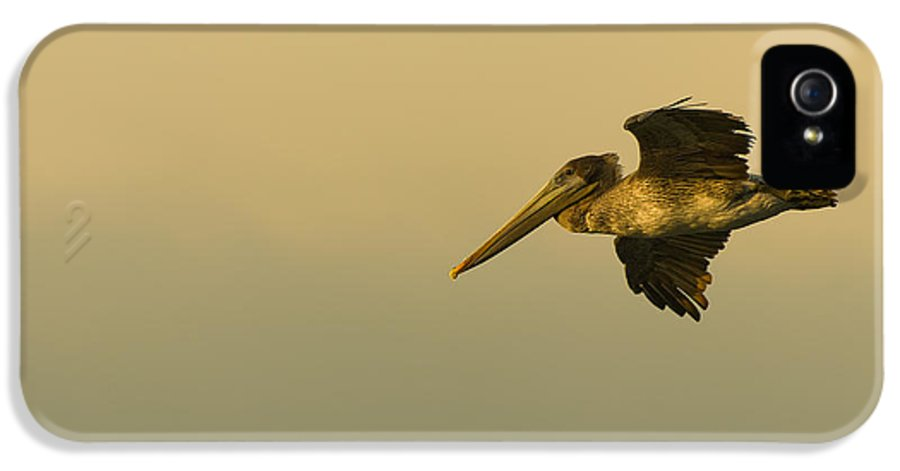Dusk IPhone 5 Case featuring the photograph Pelican by Sebastian Musial