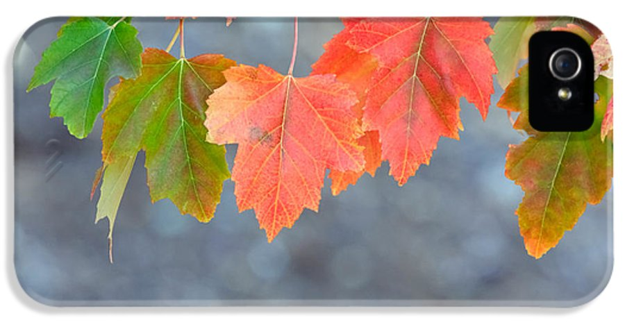 Fall IPhone 5 Case featuring the photograph Autumn Leaves by Mariusz Blach