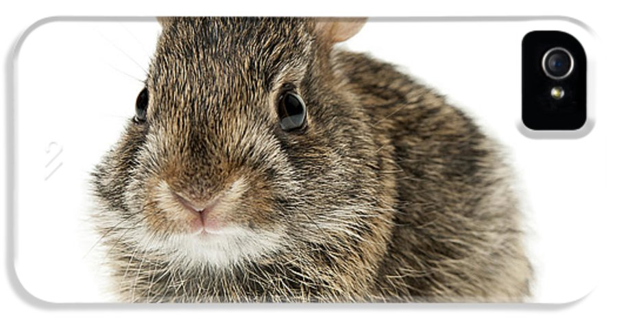 Rabbit IPhone 5 Case featuring the photograph Baby Cottontail Bunny Rabbit by Elena Elisseeva