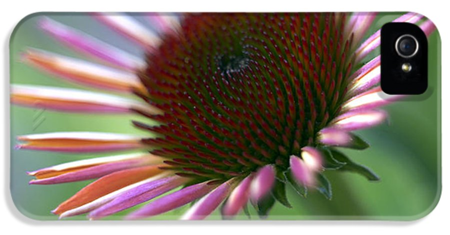 Genus Echinacea IPhone 5 Case featuring the photograph Coneflower by Tony Cordoza