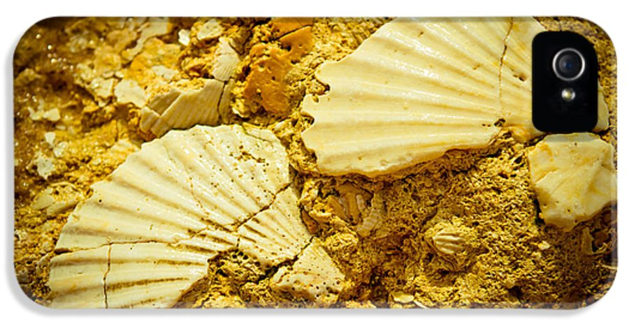 Outdoor IPhone 5 Case featuring the photograph Seashell In Stone by Raimond Klavins